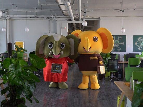 求助听器!萌物军团小象暖暖联合团长大象奔奔向社会各界爱心人士发出倡议