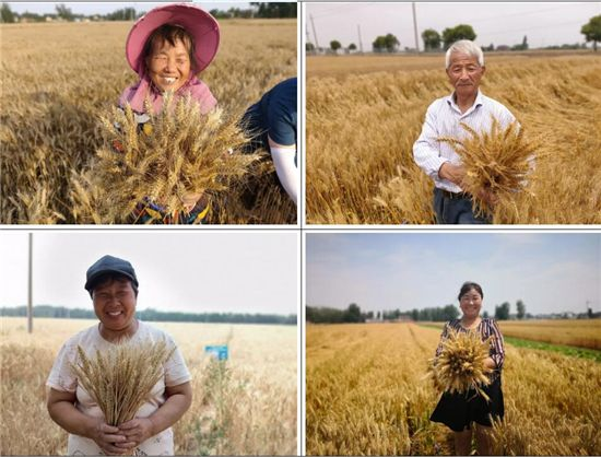 数万农户争相参与!小蓝帽增产药全国小麦粮王争霸赛魅力何在?