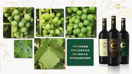 新疆中菲酒庄|戈壁滩上的万亩葡萄绿洲,誓要酿制属于中国人的葡萄酒